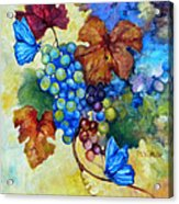 Blue Butterflies And Grapevine  Acrylic Print