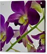 Blue Charm X Aridang Blue Orchid - 3 Acrylic Print
