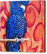 Blue Cockatoo Acrylic Print by Diana Shively