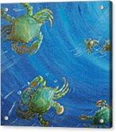 Blue Crab Run Acrylic Print