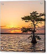Blue Cypress Lake Sunrise Acrylic Print
