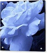 Blue Delight Acrylic Print