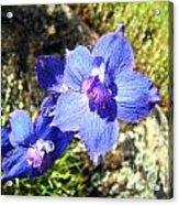 Blue Delphinium Flower Photograph Acrylic Print