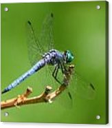 Blue Dragonfly Start Up Acrylic Print