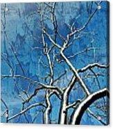 Blue Dream Acrylic Print by Marty Koch