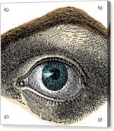 Blue Eye Acrylic Print