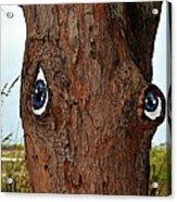 Blue Eyed Pine Acrylic Print