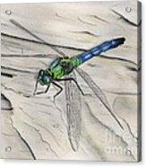 Blue-green Dragonfly Acrylic Print