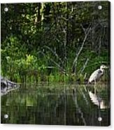 Blue Heron Long Pond Wmnf Acrylic Print