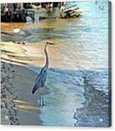 Blue Heron On The Beach Acrylic Print