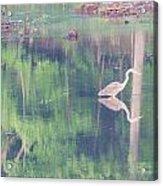 Blue Heron6 Acrylic Print