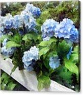 Blue Hydrangea On White Fence Acrylic Print