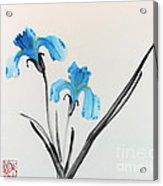 Blue Iris I Acrylic Print