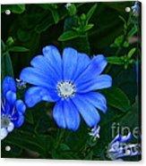 Blue Magic Acrylic Print by Byron Varvarigos