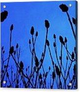Blue Morning Acrylic Print