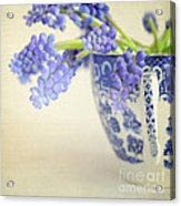 Blue Muscari Flowers In Blue And White China Cup Acrylic Print
