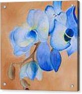 Blue Mystique Orchid Acrylic Print
