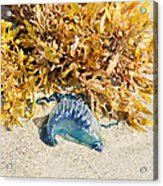 Blue On The Beach Acrylic Print