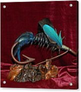 Blue Persuader Trout Fly Acrylic Print