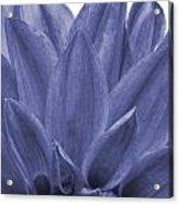Blue Petals Acrylic Print by Al Hurley