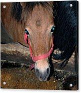 Blue Pony Eyes Acrylic Print