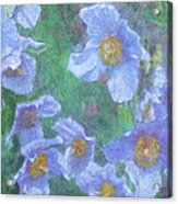 Blue Poppies Acrylic Print