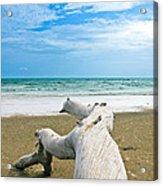 Blue Sea And Sky With Log On The Beach Acrylic Print by Nawarat Namphon