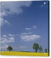 Blue Sky Covers A Yellow Field Acrylic Print