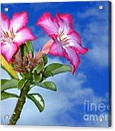 Blue Sky Pink Flower Acrylic Print