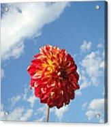 Blue Sky White Clouds Floral Art Prints Dahlia Flowers Acrylic Print