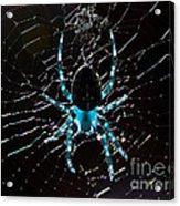 Blue Spider Acrylic Print