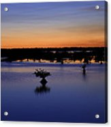 Blue Sunset Mangroves Acrylic Print