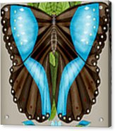 Blue Tiled Butterfly Acrylic Print