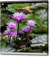 Blue Tropical Water Lilies Acrylic Print