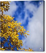 Blue White And Gold Acrylic Print