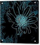 Blue Wildflower   Acrylic Print
