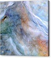 Blue Wolf In Mist Acrylic Print