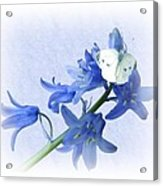 Bluebells And Butterflies Acrylic Print