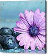 Blueberries And Daisy Acrylic Print