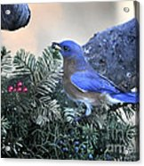 Bluebird Christmas Wreath Acrylic Print