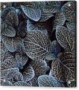 Bluey Acrylic Print
