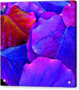Bluish Purple And Pink Leaves Acrylic Print