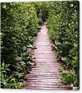 Boardwalk Swamp Acrylic Print