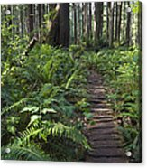 Boardwalk Winds Through The Forest Acrylic Print