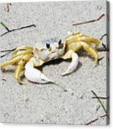 Boca Grande Crab Acrylic Print