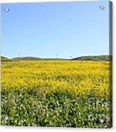Bodega Bay . Yellow Field . 7d12403 Acrylic Print by Wingsdomain Art and Photography