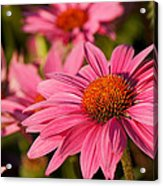 Bold And Beautiful Acrylic Print