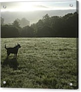 Bolinas, California, United States Dog Acrylic Print by Keenpress