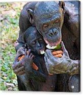 Bonobo 3 Acrylic Print