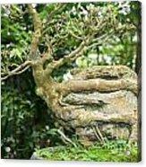 Bonsai Root And Stone Acrylic Print
